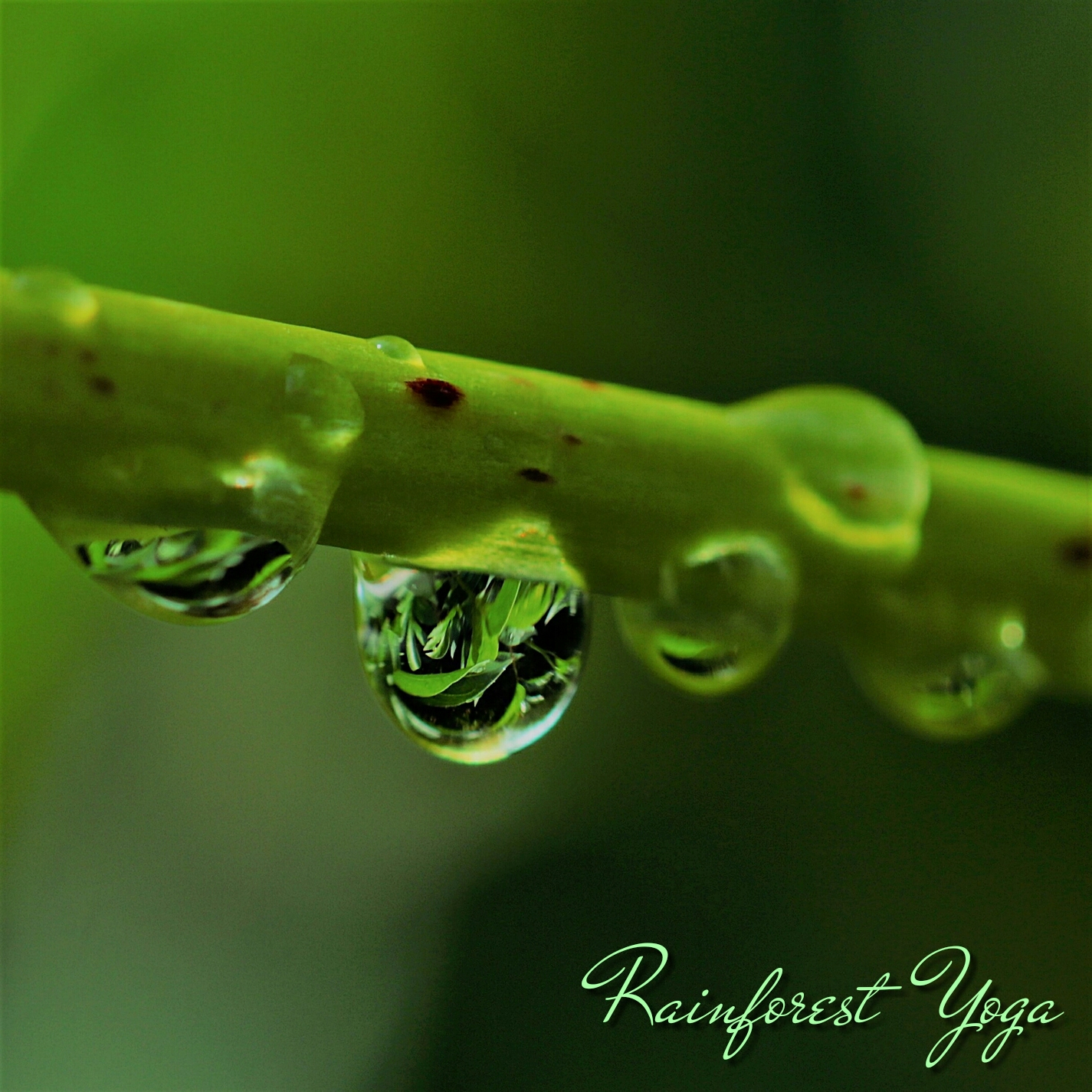 Rainforest Yoga Retreat Mp3 Music Download | Music2relax com