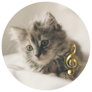 download classical music for cats