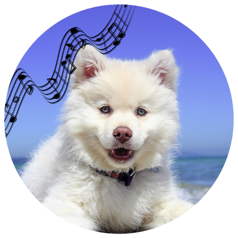 Classical Music For Dogs Mp3 Download Music2relax Com